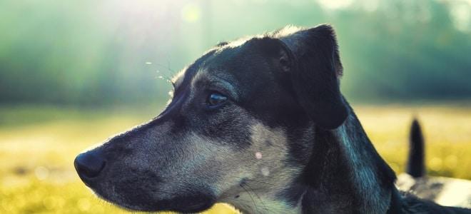 Müssen Sie bei Hartz-4-Bezug Hundesteuer für Ihren Vierbeiner bezahlen?